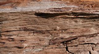 Wood-april-2020