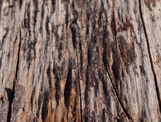 Wood-Aug-2020