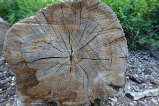 Wood-july2020