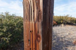 Wood-dec-2020
